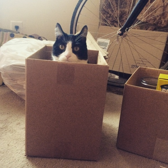 Fatty was a big fan of all the available boxes for sitting.